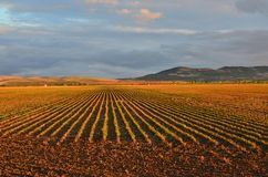 Evening fields with crops in rows Seville Spain stock photos