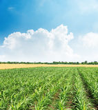 Agricultural green field and clouds in blue sky Stock Images