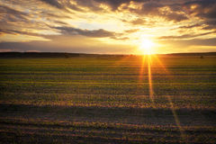 Agricultural green field during sunset. Royalty Free Stock Photography