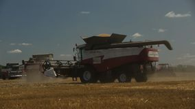 Agricultural harvesting equipment travels across the field. In the background is a tractor and a truck with two trailers to harvest wheat, cover shot stock footage