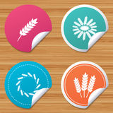 Agricultural icons. Gluten free symbols. Royalty Free Stock Photo