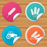 Agricultural icons. Wheat corn or Gluten free. Royalty Free Stock Images