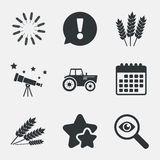Agricultural icons. Wheat corn or Gluten free. Royalty Free Stock Photos