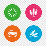 Agricultural icons. Wheat corn or Gluten free. Stock Image
