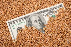 Agricultural income concept Stock Image