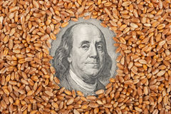 Agricultural income concept Royalty Free Stock Image