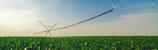 Agricultural irrigation system watering corn field in summer Stock Photos