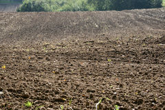 Agricultural land Royalty Free Stock Image