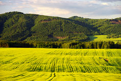 Agricultural land. Spring of an early evening landscape Stock Photo