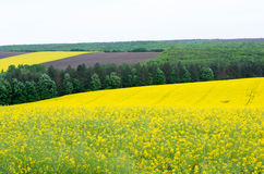 Agricultural land with colza. Agricultural fields sown with colza Stock Photo