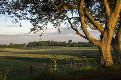 Agricultural Land - County Antrim - Northern Ireland. Early morning sunlight on the trees and fields of rural Ireland - County Antrim in Northern Ireland stock image