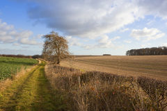 Agricultural land with footpath. A country bridleway with a hawthorn hedgerow and an ash tree surrounded by straw stubble fields and woods in a yorkshire wolds Stock Photography