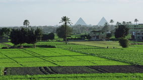 Agricultural land in front of pyramids, Faiyum, Egypt stock video