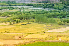 Agricultural land of Leh, Ladakh Royalty Free Stock Image