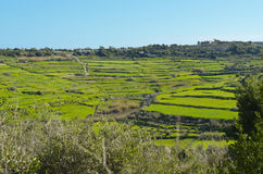 Agricultural land - Malta Stock Images