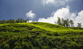 Agricultural land in Nilgiris near Ooty Royalty Free Stock Photos