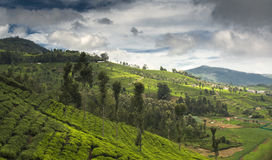 Agricultural land in Nilgiris near Ooty Stock Images
