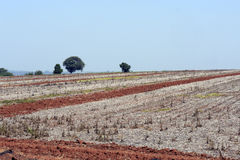 Agricultural land at rest waiting to be plowed Royalty Free Stock Photo