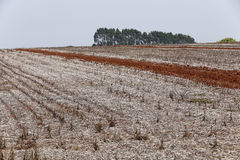 Agricultural land at rest waiting to be plowed Royalty Free Stock Image