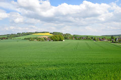 Agricultural land tillage, wheat and rape against the blue sky Stock Images