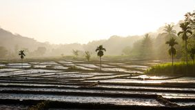 Agricultural land view in foggy morning royalty free stock photography