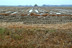 Agricultural land in the winter. Stock Image