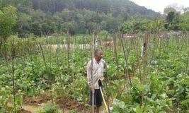 Agricultural Lands in Ambegoda Stock Image
