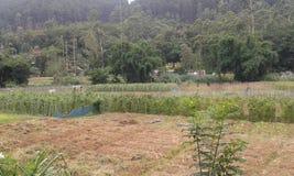 Agricultural Lands in Ambegoda Stock Photos