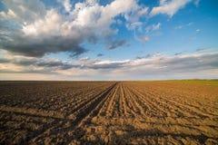 Agricultural landsape, arable crop field.  Stock Image
