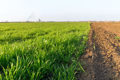 Agricultural landsaple, arable crop field.  Royalty Free Stock Photography