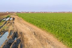 Agricultural landsaple, arable crop field.  Stock Images