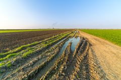 Agricultural landsaple, arable crop field.  Royalty Free Stock Photo