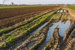Agricultural landsaple, arable crop field.  Stock Photo