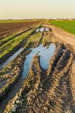 Agricultural landsaple, arable crop field.  Royalty Free Stock Photos