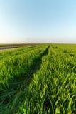 Agricultural landsaple, arable crop field.  Stock Images