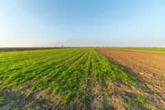 Agricultural landsaple, arable crop field.  Stock Photography