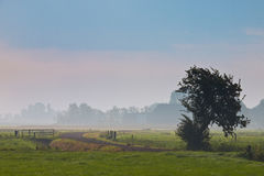 Agricultural landscape. With lonely tree in morning mist Stock Image
