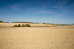 Agricultural Landscape. Agricultural fields with deep blue sky Royalty Free Stock Photos