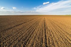 Agricultural landscape, arable crop field.  Stock Photos
