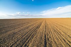 Agricultural landscape, arable crop field.  Royalty Free Stock Images