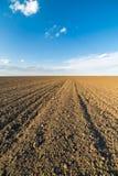 Agricultural landscape, arable crop field.  Stock Images