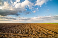 Agricultural landscape, arable crop field.  Stock Image