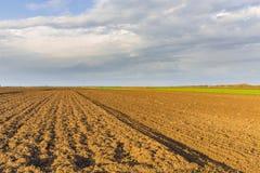 Agricultural landscape, arable crop field. Agricultural landscape Stock Image