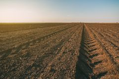 Agricultural landscape, arable crop field. Arable land is the land under temporary agricultural crops capable of being ploughed and used to grow crops Royalty Free Stock Image