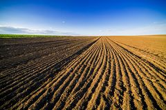 Agricultural landscape, arable crop field. Arable land is the land under temporary agricultural crops capable of being ploughed and used to grow crops Royalty Free Stock Photography