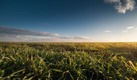 Agricultural landscape, arable crop fields. Agricultural landscape, arable crop field Stock Image