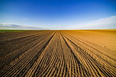 Agricultural landscape, arable crop field. Arable land is the land under temporary agricultural crops capable of being ploughed and used to grow crops Stock Images