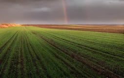 Agricultural landscape, arable crop fields. Agricultural landscape, arable crop field Stock Photography
