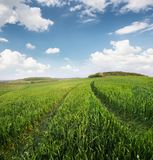 Agricultural landscape as a background. Field and sky in the summer time. Agricultural landscape as a background Stock Photos