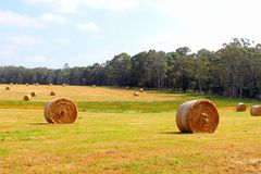 Agricultural haybales landscape, rural Australia Royalty Free Stock Photo